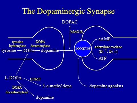 parkinsons and dopamine