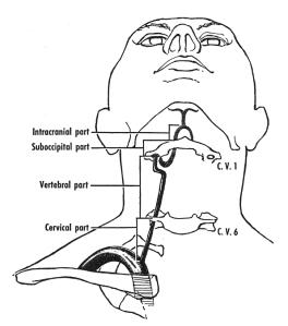 Course of the vertebral artery
