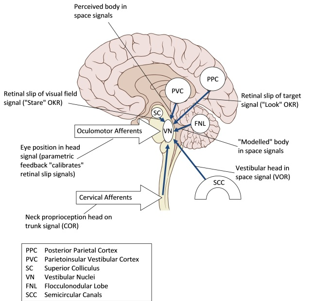 Inputs to the Vestibular Nuclei