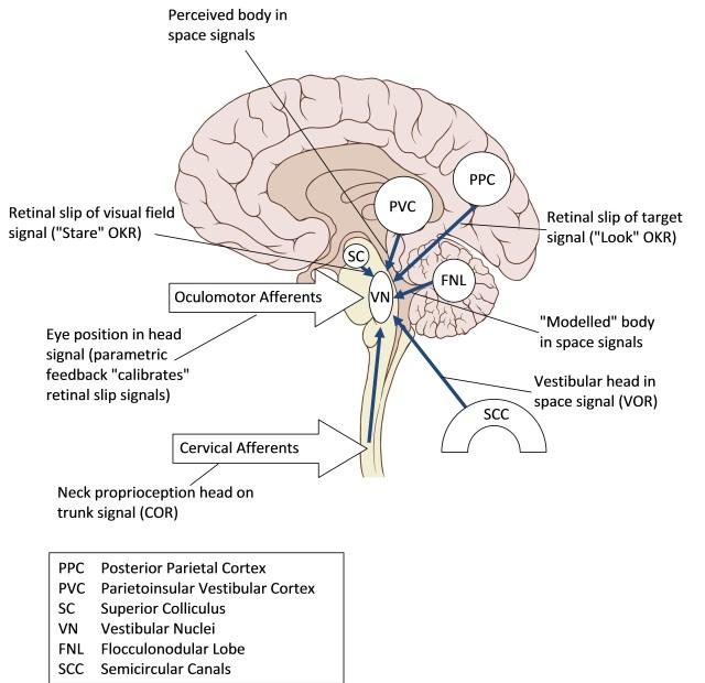 Inputs to the Vestibular Nuclei